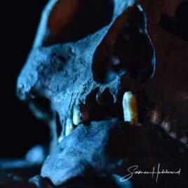 Simon-Hubbard-Bio-1